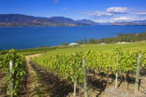 CedarCreek vineyard
